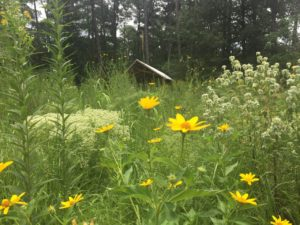 yellow flowers and other perennials
