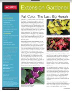 Fall Extension Gardener newsletter flyer image