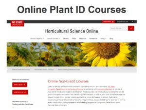 Top of Plant ID Website
