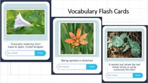 Screen Shot Flash Cards