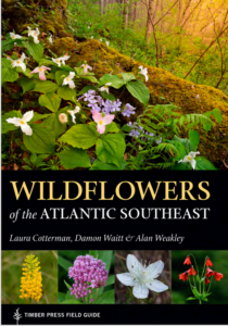 Wildflowers of the Atlantic Sutheast