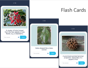 Examples of Flash Cards