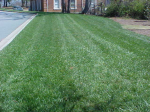 Cover photo for Renovating Cool-Season Lawns