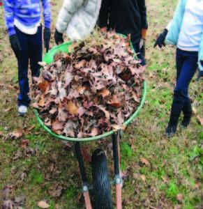Wheelbarrow with leaves