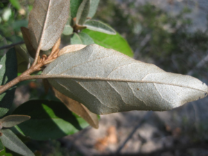 Bottom of leaf